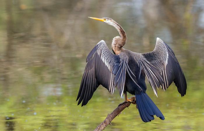 Parque Nacional Keoladeo do Gana, Rajasthan -Anteriormente conhecido como Santuário de Pássaros Bharatpur, o Parque Nacional Keoladeo do Gana está situado no distrito de Bharatpur na periferia a leste do estado. Constituído em 1982, o parque foi adicionado à lista dos Locais de Património Mundial da UNESCO em 1985 pelas suas 370 espécies de pássaros e animais protegidos pela reserva. Originalmente estabelecida como uma reserva de caça para maharajas nos anos de 1850, o parque é agora uma área de reprodução dos raros e evasivos grous siberianos.