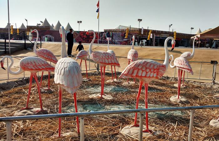 تماثيل لطائر الفلامنجو ترحب بالزائرين في منطقة إقامة مهرجان ران أوستاف في نسخة عام 2015-2016. يتكاثر طائر الفلامنجو الأكبر،وهو الطائر الرسمية للولاية، في صحراء ران الكبرى في كوتش في شهر أغسطس